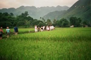 Wandelen tussen de rijstvelden rin de Mai Chau vallei...