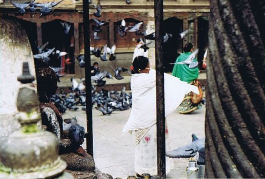 Pigeons waiting for food offerings to the Nepalese Gods...