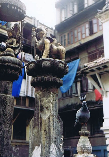 A posing pigeon...