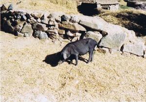 Tibet_Ganden_1999_Img0011