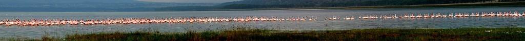 Kenya,_Nakuru_Lake