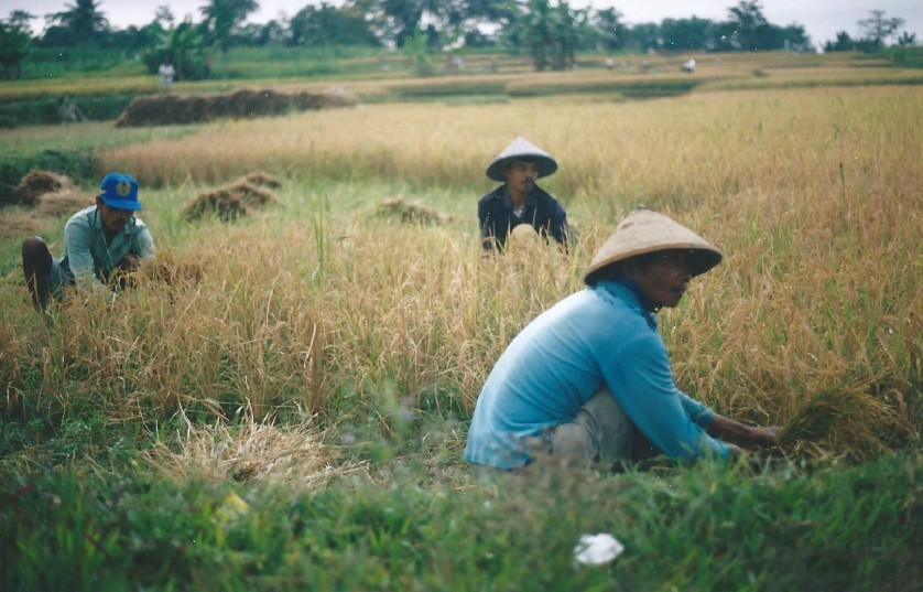 Indonesie_Baturaden_2003_Img0018