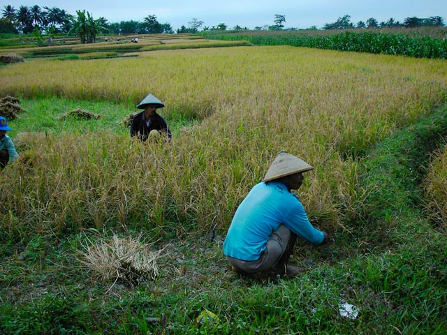 Indonesie_Baturaden_2003_Img0019