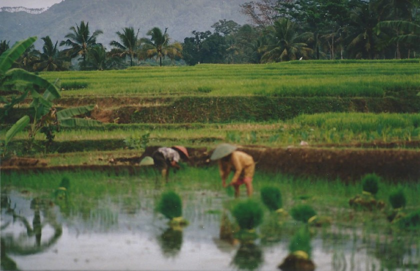 Indonesie_Baturaden_2003_Img0023