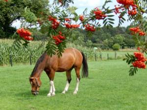 Paard in wei vlak bij Arendonk...