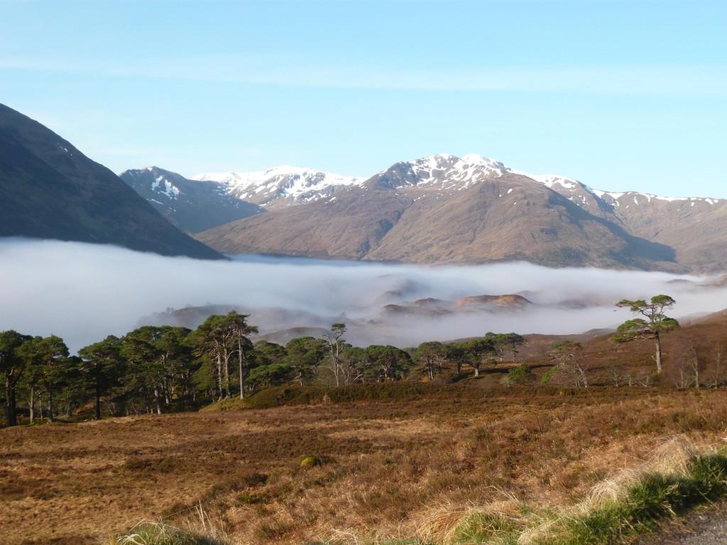 Een van de laatste stukken oerbos van Schotland...
