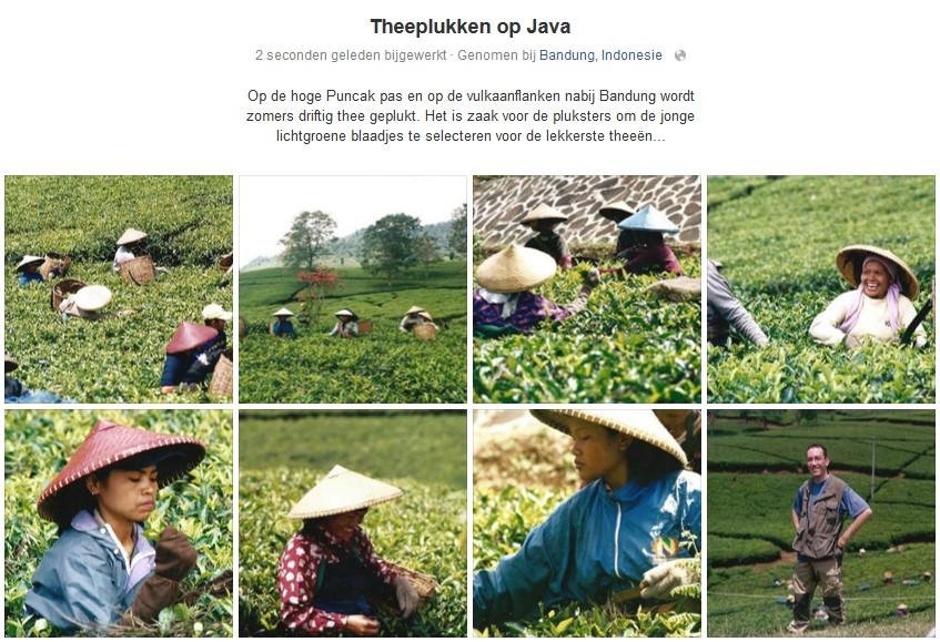 0003 Theepluksters op Java