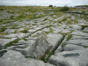 Cracks in the limestone...
