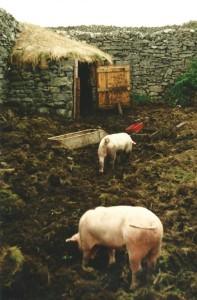 Little pig shed in an Aran Garden...