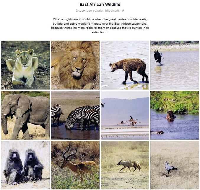 0008 Safari_EN