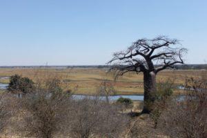 botswana_choberivercruise_2015_img0008