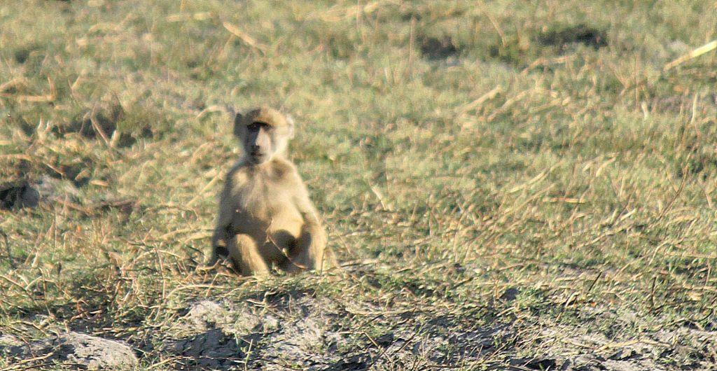 botswana_choberivercruise_2015_img0428