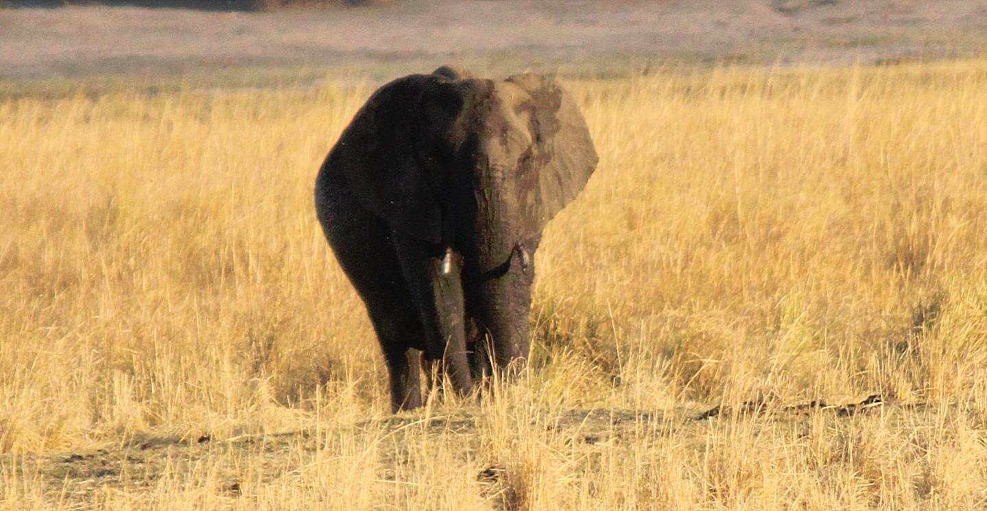 botswana_choberivercruise_2015_img0544