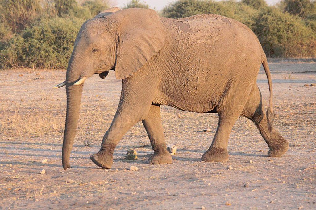 botswana_chobe_2015_img0038