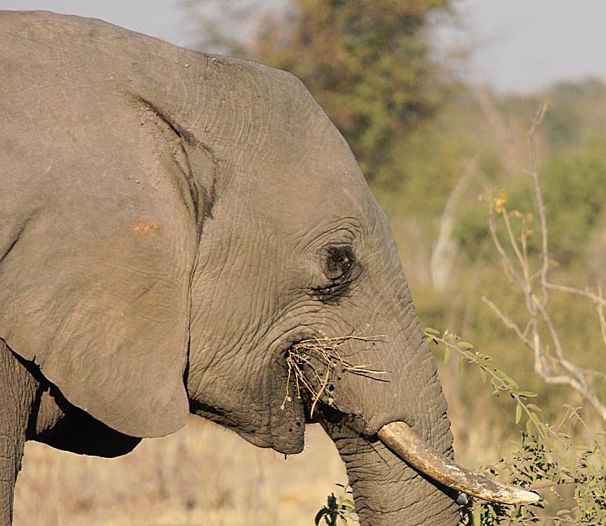 botswana_chobe_2015_img0094