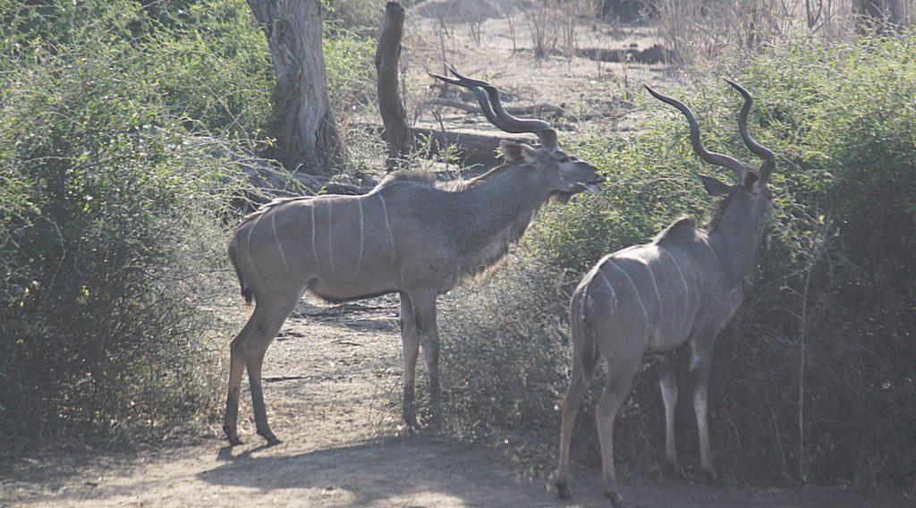 botswana_chobe_2015_img0164